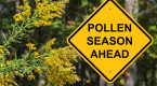 Allergy season: Here's how 2019 is shaping up for sufferers