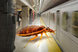 PHOTO: A bed bug has been found on the Toronto subway
