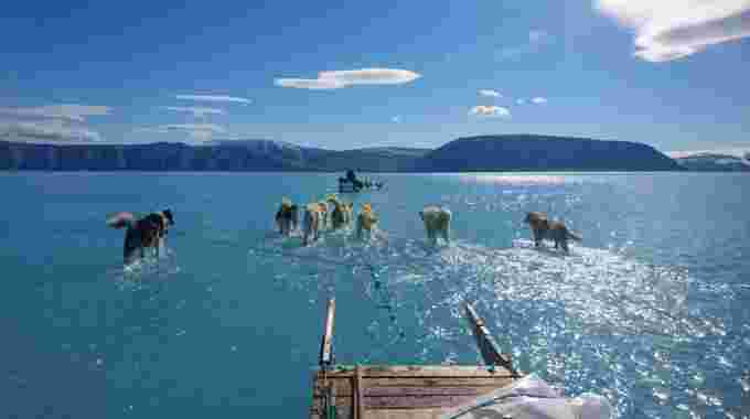 Steffan Olsen sled dogs on Greenland ice melt from twitter w permission