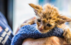 'Baby Yoda'-looking kitten saved from California wildfire