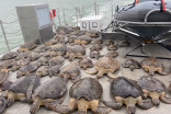 Thousands of cold-stunned turtles transported to Texas rescue centres