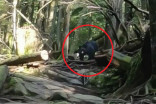 Video: Black bear chases B.C. mountain bikers down trail