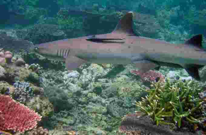 philippines coral reef wiki cc