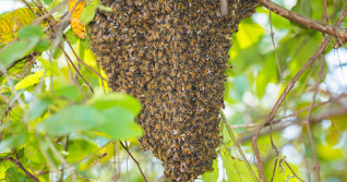 A swarm of 40,000 bees shuts down entire city block