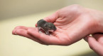Baby mice 'shut down' to survive extreme cold